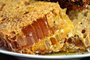 野生高山土蜂蜜